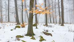 Hidden forest treasure (BenedekM) Tags: pilis nature nikon nikond3200 d3200 sigma1750f28 forest woods leaves snow winter empty treasure foggy fog rocks rck rocky