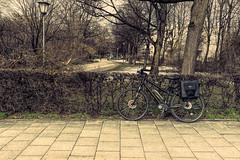 2019 Bike 180: Day 34, March 11 (suzanne~) Tags: 2019bike180 bike bicycle munich bavaria germany park tree lamp sidewalk