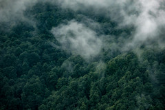 Picos de Europa, Spain (bior) Tags: fujifilmxpro2 picosdeeuropa mountain spain landscape xf55200mmf3548 clouds view forest trees mist