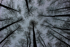 Woods (Péter Vida) Tags: natural wesen wood baum scene scenery panorama vegetable pflanze woods wald sky himmel természet fa tájkép növény erdő ég