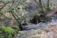 On the bank of the Plym (phileveratt) Tags: river plym devon fencefriday fencedfriday happyfencefriday hff canon eos77d efs55250