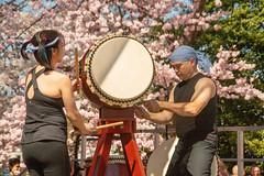 CherryBlossomDC2019-666.jpg (carlton.colter) Tags: kizuna cherryblossomdc taiko taikotakeover sakurataikofest washington dc usa