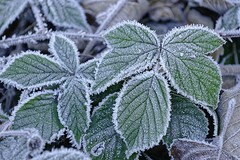Givre (Nicopope) Tags: givre froid frimas hiver