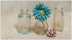 Still Life (N.the.Kudzu) Tags: tabletop stilllife glass vase pharmacy bottles flower seashell canondslr zenitar50mmf12 ringlight photoscape texture frame home