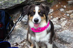 Callie's First Hike (Angel_Photos) Tags: puppy dog smiles first hike hiking outdoor new hampshire whitemountains nh joy happiness fun love smileofadog pet portrait doublehead mountain