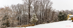 Winter Storm Gia, Color Panorama (Donald.Gallagher) Tags: contrast crop de delaware gia2019 horizontal horizontalmerge nature newcastlecounty northamerica panorama pikecreek public sharpening storms trees typecolor typelightroom typepanoramicshot typeportrait typeshutterbuttonfocus typewideangle usa weather winter woodcreek