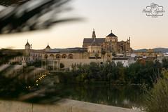 #catedral #cathedral #mezquita #mosque #atardecer #sunset #río #river #ciudad #city #córdoba #andalucía #españa #spain #turismospain #paisaje #landscape #reflejos #reflexes #photography #photographer #sonyimages #sonyalphasclub #sonystas #sonyalpha #sonya (Manuela Aguadero PHOTOGRAPHY) Tags: spain mosque sonyα6000 mezquita manuelaaguaderophotography city sonyalpha sonyimages catedral reflejos españa reflexes sony6000 sonyalphasclub río photographer paisaje cathedral atardecer córdoba turismospain andalucía sonya6000 sonystas ciudad sunset river sonyalpha6000 landscape photography