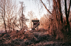 Wildlife Watching Tower (AIeksandra) Tags: fiumepo forest trees house home architecture wild cremona 35mm analogue analog praktical riverside lombardia pianurapadana wildlife tower outside perspective