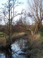 Early In Winter (Marit Buelens) Tags: nature landscape belgië belgium flanders vlaanderen westvlaanderen bruges brugge sintkruis naturereserve natuurreservaat natuurgebied brook beek gracht ditch tree boom willow pollardwillow grass field