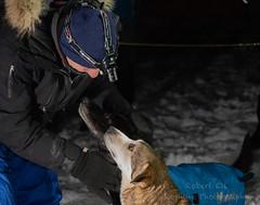 _ROS3437.jpg (Roshine Photography) Tags: dogs yukonquest dawson winter dogyard 36hourrestart huskies environmental yukonterritory snow dawsoncity yukon canada ca