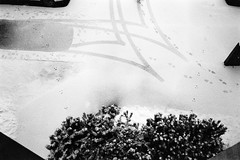 Tracks (Petri Karvonen) Tags: tracks cars snow winter tire footprints monochrome film blackandwhite kodak trix 400tx olympus mjuii μmjuii squirrel trees park parkinglot finland suomi