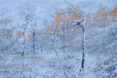 White Butte Snow and Colour (s.aspinall) Tags: fall sask saskatchewan fallcolour fallfoliage snow whitebuttetrails winter