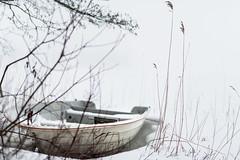 Misty day (lortopalt) Tags: misty foggy horndal stefan lortopalt sjön rossen lake winter vinter