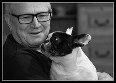 Daisy loves Glen. (marneejill) Tags: dog man black white love owner master affection frenchie french bulldog tenderness