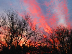 IMG_4324 3-24-2019 (PGK88) Tags: sunrise dawn morning trees branches sky light glow red orange silhouette 2019 outdoors nature sunlight early