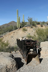 QE3A9802 (TravelBear71) Tags: arizonasonoradesertmuseum museum desert tucson arizona sonorandesert cactus gardens mountainlion puma