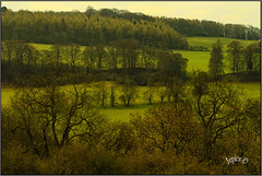 Tree Layers.. (Picture post.) Tags: landscape nature green hills trees countryside fields winter paysage arbre