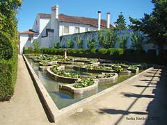 Jardim do Paço Episcopal, Castelo Branco 10 (Sofia Barão) Tags: portugal beira baixa jardim garden