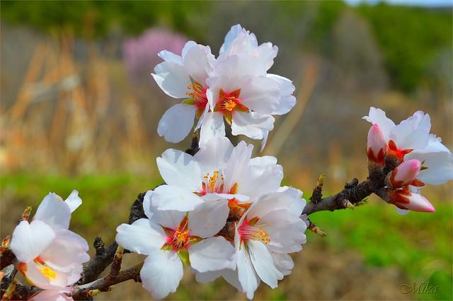 Обои Весна, Spring, Цветение, Flowering картинки на рабочий стол, раздел цветы - скачать