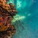 Underwater at Blairgowrie Pier-61