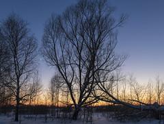 Winter sunset / Зимний закат (dmilokt) Tags: sunset природа nature пейзаж landscape лес forest dmilokt закат рассвет восход sunrise nikon d850 d3