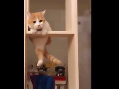 Cute Cats Climbing the rack (tipiboogor1984) Tags: aww cute cat funny dog youtube