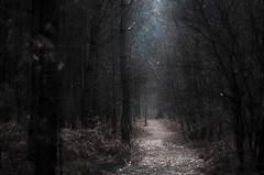 Le chemin (david49100) Tags: 2019 février maineetloire seichessurleloir arbres chemin d5100 nikon nikond5100 path trees