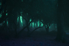 Untitled (elsableda) Tags: forest trees tree durban south afric africa fog mist winter foggy