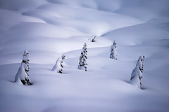 Wanderers (Michael Bollino) Tags: winter snow trees alpine mountrainier rainier nationalpark wild cold nikon induro rrs