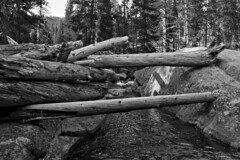 Lyell Fork Hike - Yosemite (brucetopher) Tags: black white blackandwhite bw blackwhite monochrome mono bnw water tuolumne river lyellfork flow flowing stream mountain rocky alpine hike hiking swim swimming waterhole wateringhole yosemite yosemitenationalpark meadows lodge west sierranevada sierra nevada sierranevadas mountains range california