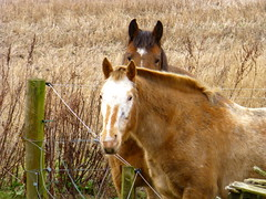 horses (Jackal1) Tags: horses nature animal equine countryside scotland