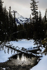 Index Peak and River (wyojones) Tags: wyoming beartoothplateau clarksforkoftheyellowstone clarksfork clarksforkvalley lodgepolepines beartoothhighway usroute212 chiefjosephhighway glacialvalley winter snow clouds sky evening eventide river fallentree tree indexpeak absarokamountains