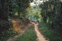 Dirt road Forest entrance In the countryside Asia (rachenbuosa) Tags: road dirt jungle country forest day nature sky grass travel rural landscape asia valley adventure cambodia europe misty winter myanmar clear mountains region blue countryside
