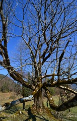 Jachenau - Weird Tree (cnmark) Tags: germany deutschland bavaria bayern jachenau weird tree branches baum äste felsen rocky outcrop spring frühling nature natur moos moss ©allrightsreserved