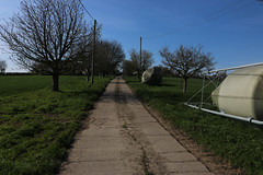 brill walk-190401-35.jpg (Phil Mercer-Kelly) Tags: sunshine spring radiooxford bbc counyryside blossom philmercer getactive brill sheep buckinghamshire europe england uk oxfordshire views bucks health windmill walker oakley walk