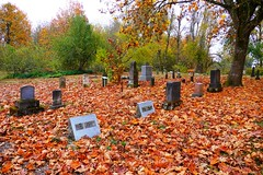 Autumn leaves cover the ground at Luper Pioneer Cemetery