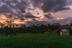 Ubud - sunset (Artur Wala) Tags: bali ubud sunset sundown clouds cloudy sky skyporn travel vacation ricefield indonesia nature alpha6000 sonyalpha6000 sonnenuntergang travelphotography amateurphotography