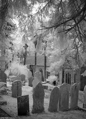 St Just's Churchyard (peterphotographic) Tags: stjustinroseland img0186sefexedwm canon a800 infrared ©peterhall cornwall westcountry england uk britain church churchyard cemetery grave graveyard tree leaf branch stjust