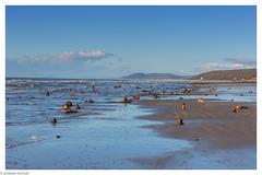 Borth beach (Jon Derricott) Tags: h