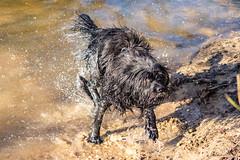 20190215-IMG_8707 (Alderbabbsack) Tags: struppi hund