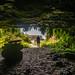 Fern Grotto Interior 2