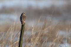 Post Sitter - Explore 3-1-2019 (ThruKurtsLens.com) Tags: 2019 flying kurtwecker nature naturephotographer seos thrukurtslenscom wildlifephotographer wildlifephotography winter
