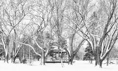 hidden gazebo (DeZ - photolores) Tags: royalcitypark guelphcanada bw blackandwhite bnw monochrome trees snow gazebo hdr dez