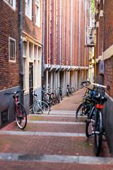 No place to hide (mic00l) Tags: 50mm amsterdam f14 jour canon eos 6d street shot night été hollandeseptentrionale paysbas nl