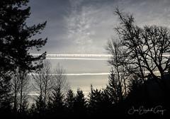 Sunrise Contrails (Joan Gray) Tags: sunrise contrails