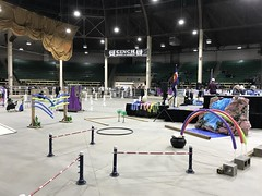 The alpaca obstacle course (f l a m i n g o) Tags: obstaclecourse nwssc national western stock show complex alpaca competition