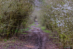 Marton Disused Railway 18th March 2019 (boddle (Steve Hart)) Tags: stevestevenhartcoventryunitedkingdomcanon5d4 marton disused railway 18th march 2019 steve hart boddle steven bruce wyke road wyken coventry united kingdon england great britain wild wilds wildlife life nature natural bird birds flowers flower fungii fungus insect insects spiders butterfly moth butterflies moths creepy crawley winter spring summer autumn seasons sunset weather sun sky cloud clouds panoramic landscape canon 5d mk4 100400mm is usm ii royalleamingtonspa unitedkingdom gb