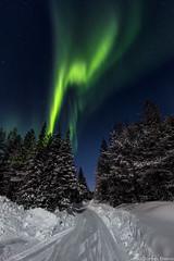 Z19_0254 LT (Zoran Babich) Tags: lainio lapland lappi finland suomi auroraborealis northerlights trees snow winter