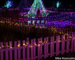 915A6320 (mikekos333) Tags: 2018 december christmas christmaslights coastalmainebotanicalgardens boothbay