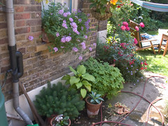 040710 grove garden crw_2017 (hoffman) Tags: flowers garden davidhoffman wwwhoffmanphotoscom british daylight england flora floral growing growth home horticulture nature outdoors plant uk